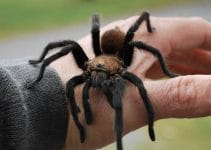How To Keep Spiders Out Of Your Tent?