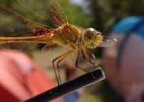 dragonfly at camping