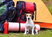 dog camping hacks